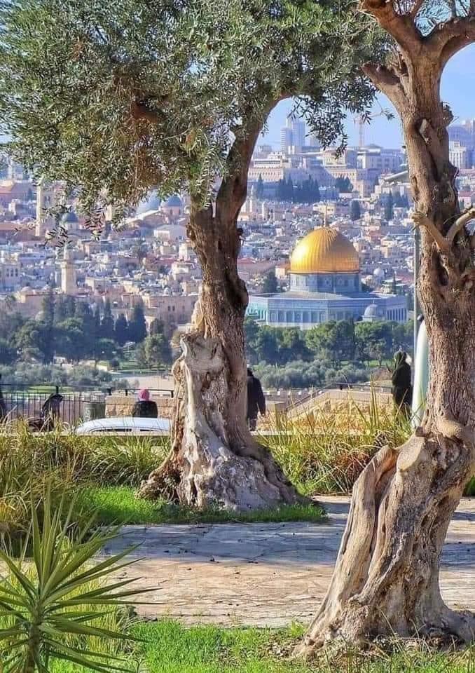 كما ورد..كتائب القسام تسهتدف المدن الإسرائيلية بأكبر ضربة صاروخية